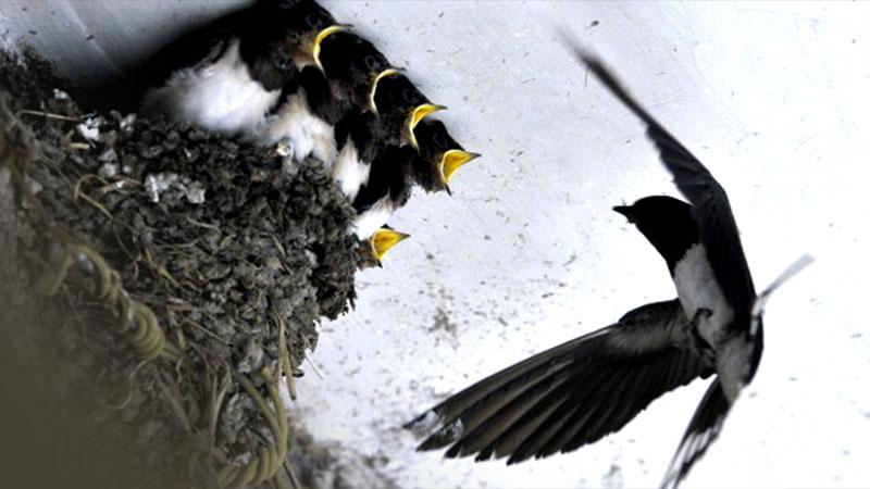 Optimalkan Penerimaan, Tim Penagih Pajak Sarang Burung Walet Dibentuk