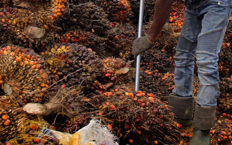 Harga Minyak Goreng Melonjak, India Pangkas Tarif Bea Masuk CPO