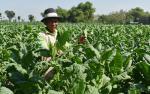 Bantu Petani dan Buruh, PMK Dana Bagi Hasil Cukai Rokok Bakal Direvisi