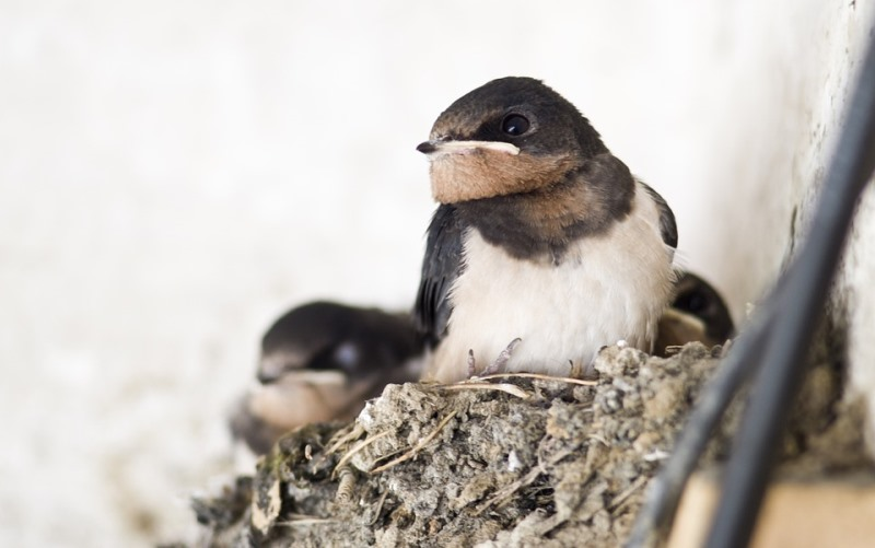 2019, Pajak Sarang Burung Walet Diusulkan Dihapus