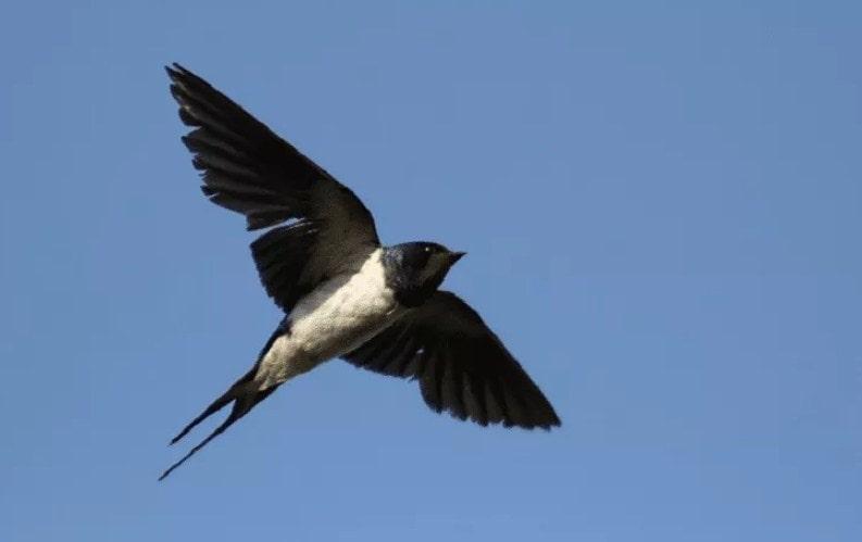 Pajak Sarang Burung Walet Dihapus, Ini Alasannya